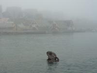 <h5>Nuuk</h5><p>Minik Hansen har taget dette smukke billede af skulpturen &quot;Havets Moder&quot; ved Kolonihavnen i Nuuk. Copyright Minik Hansenansen har taget dette smukke stykke kultur ved Kolonihavnen i Nuuk. Copyright Minik Hansen</p>