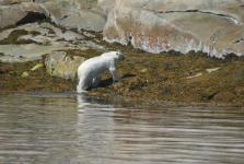 <h5>Qaqortoq</h5><p>Else Petersen Heilmann har taget dette smukke billede af et møde med et af verden smukkeste dyr. Copyright Else Petersen Heilmann</p>