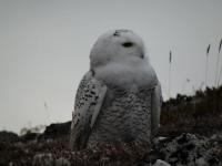 <h5>Dyreliv i Grønland</h5><p>© Henrik Hansen. Dette fantastiske billede er taget af Henrik Hansen.</p>