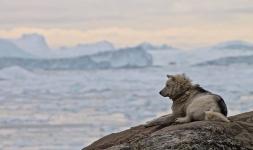 <h5>Ilulissat</h5><p>© Hervé Danis. Picture from Ilulissat</p>