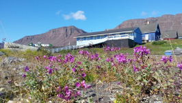 <h5>Sommer i Qeqertarsuaq</h5><p>© Søren Andaralak Lyberth. Søren Andaralak Lyberthhar taget dette smukke billede i Qeqertarsuaq.</p>
