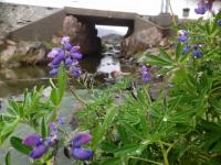 <h5>Sommer i Qaqortoq</h5><p>© Nuka Korsgaard. Nuka har taget dette smukke billede i Qaqortoq.</p>