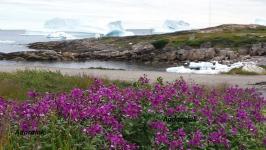 <h5>Sommer i Qeqertarsuaq</h5><p>© Søren Andaralak Lyberth. Søren har taget dette smukke billede nær Qeqertarsuaq.</p>