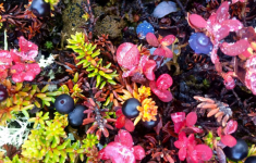 <h5>Sisimiut</h5><p>© Maja Motzfeldt Haahr har taget dette smukke efterårsbillede i Sisimiut. Colorful Greenland? Det synes jeg 🙂</p>
