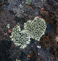 <h5>Sisimiut</h5><p>© Maja Motzfeldt Haahr har taget dette smukke efterårsbillede i Sisimiut. Naturen har her skabt det som ligner 2 hjerter </p>