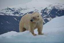 <h5>Greenland - land of beauty 2016</h5><p>Billede nr. 9:   © Henrik Hansen har taget dette billede.</p>