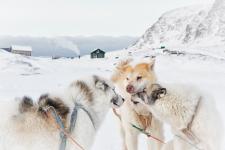 <h5>Greenland - land of beauty 2016</h5><p>Billede nr. 59:  © Lone Israelsen har sendt dette smukke billede af slædehunde.</p>